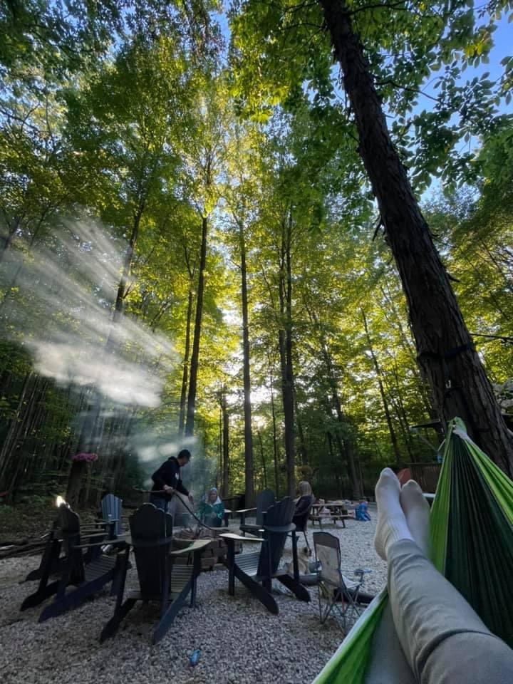 trees and hammock